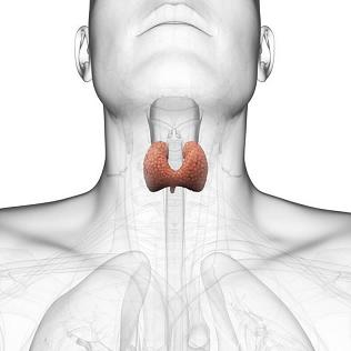 Лечение щитовидки катушками Мишина